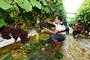 关于举办葡萄早期丰产栽培技术培训的通知