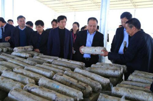 陕西省考察团来泌阳县参观考察香菇产业扶贫