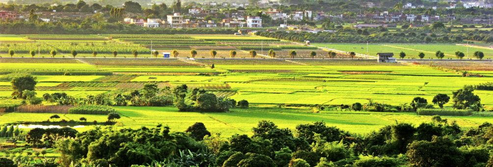 希望的田野-朱村优质丝苗米生产基地