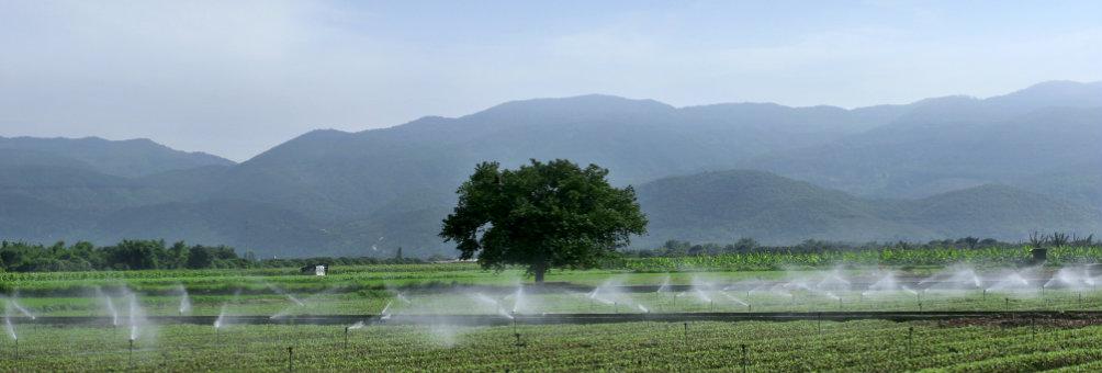 朱村都市型生态农业基地
