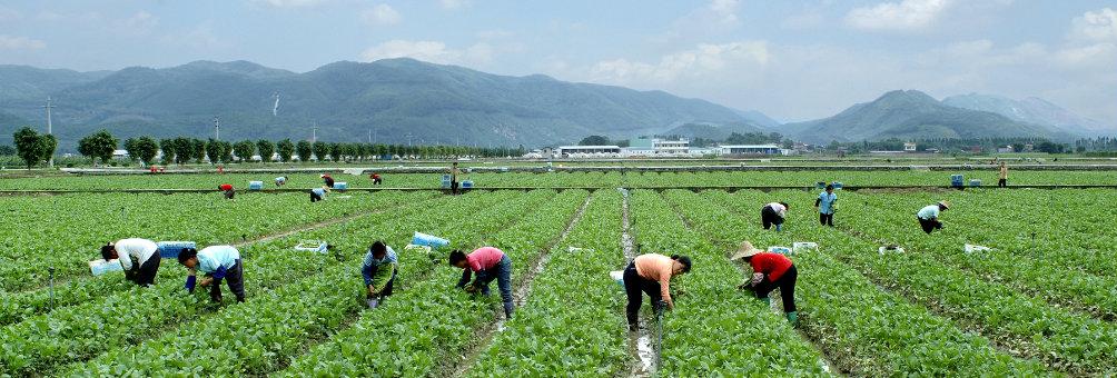 现代都市农业