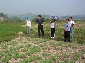 """汤阴县农业专家下乡""""接地气"""""""