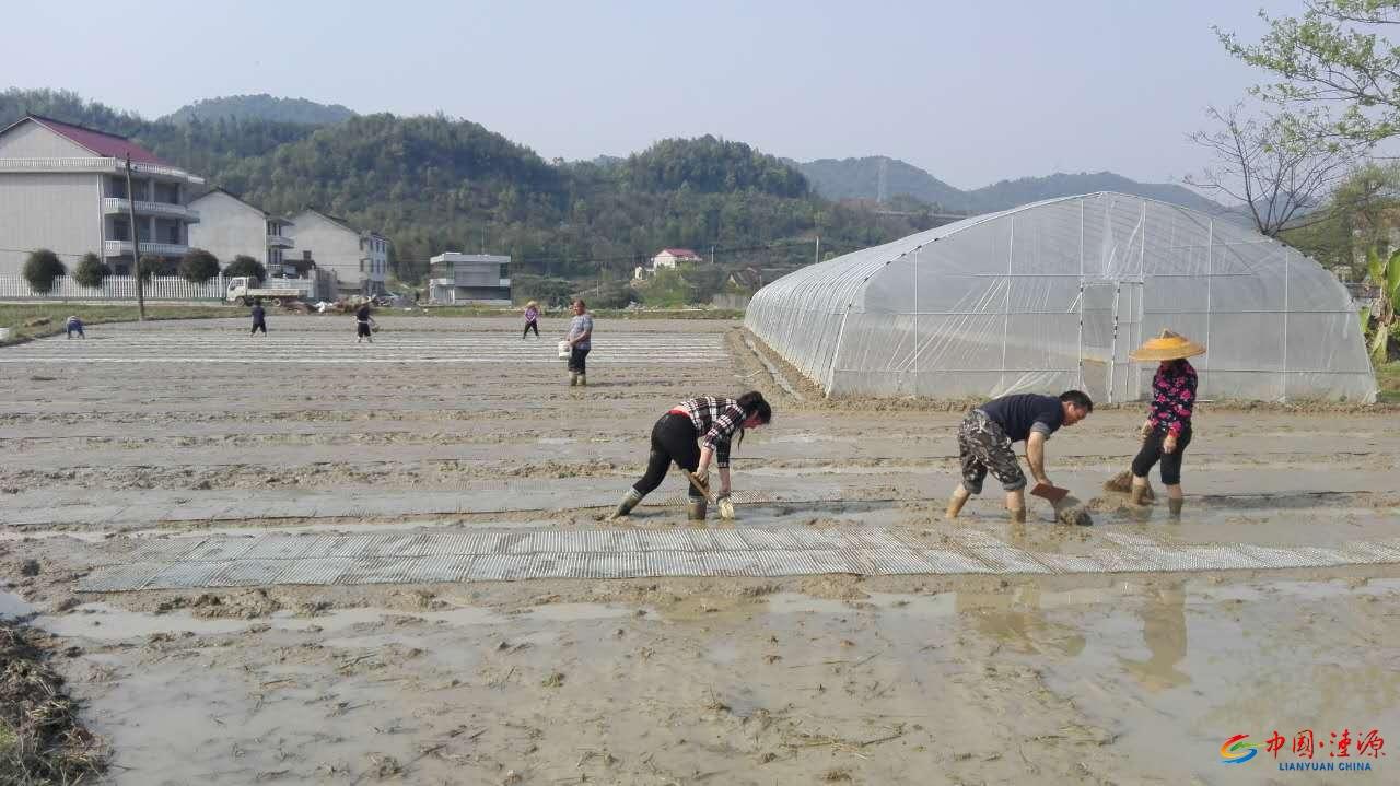 涟源市农业局到白马镇开展水稻机插秧集中育秧技术指导