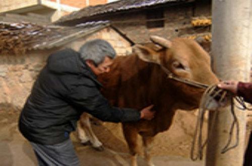 动物疫病防治技术培训
