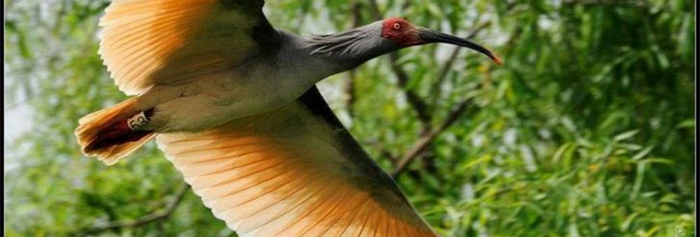 国家自然保护区——董寨