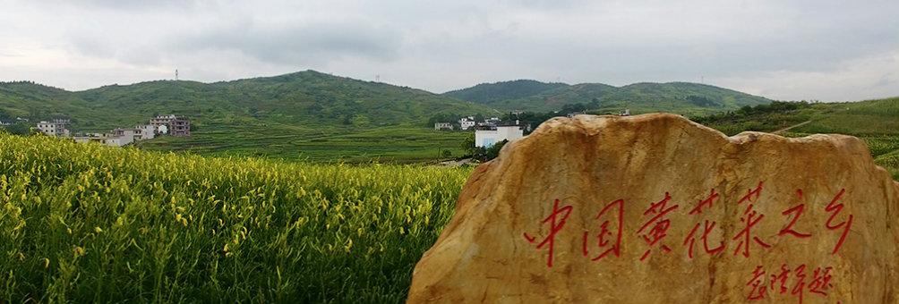 祁东县黄花菜基地