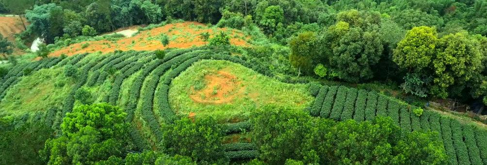 抓好农业科技培训 促进农业生产发展(金垌三唛顶茶场)