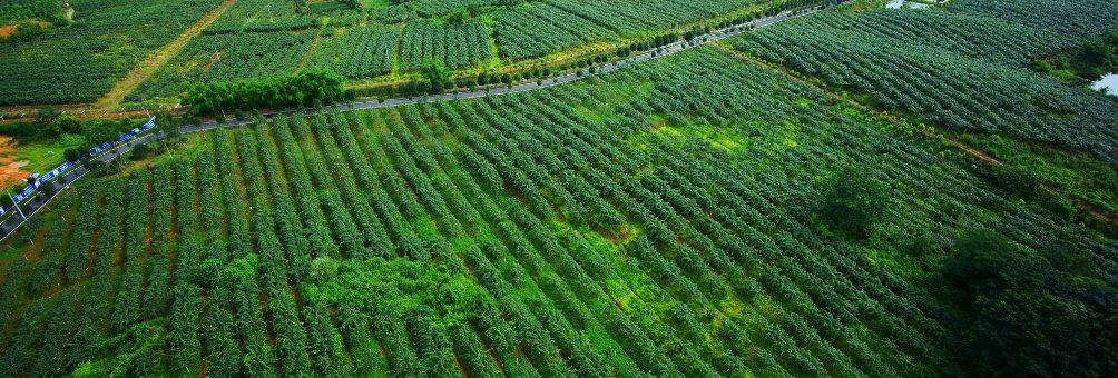 蒲江县生态农业-猕猴桃基地