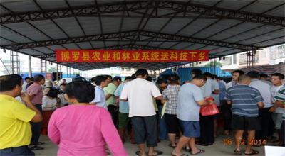 博罗县农林系统到龙华镇开展 科技下乡活动