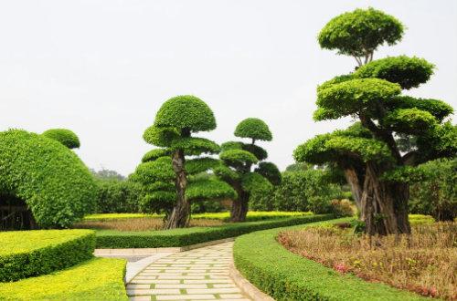 园林树木的修剪与整形