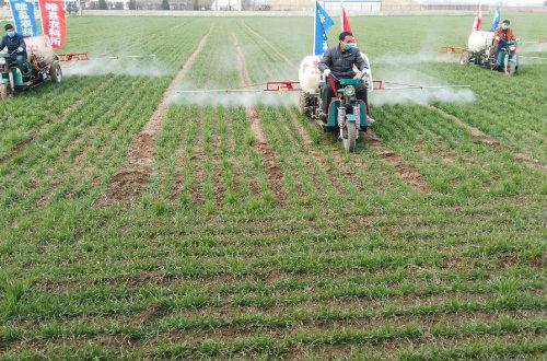 睢县农科所积极做好小麦冬季田间管理