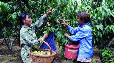 淇县大力扶持林农发展优质经济林