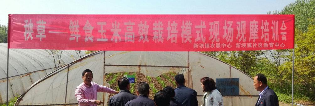 新坝镇社区教育中心开展秧草-鲜食玉米高效栽培技术培训