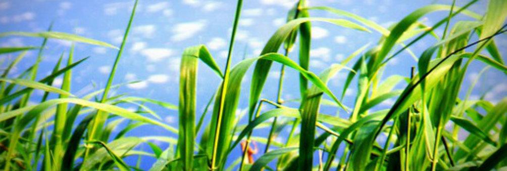 丰城市农机局大力推广水稻秸秆全量还田技术