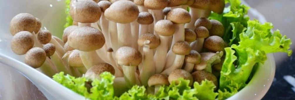 丰城市蘑菇产业促扶贫