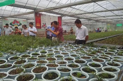 新集镇成人学校石斛种植培训基地