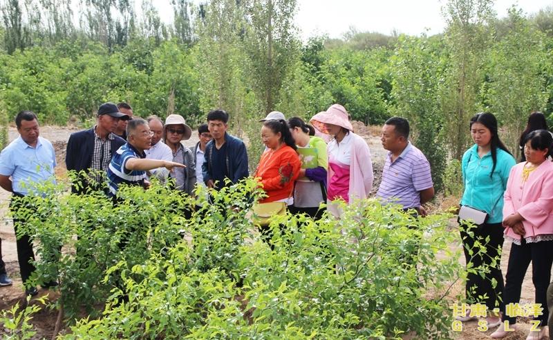 矮化密植枣园夏季管理技术指导培训