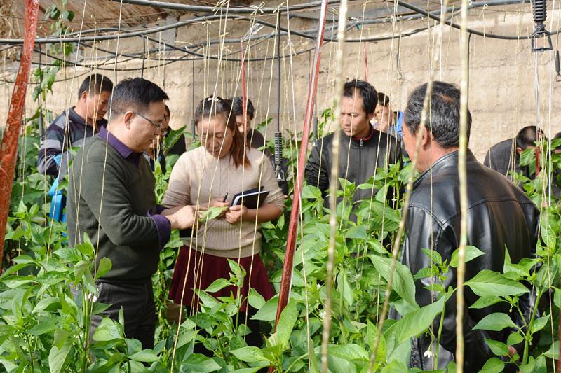 温室蔬菜大棚病虫害预防措施和防治方法培训