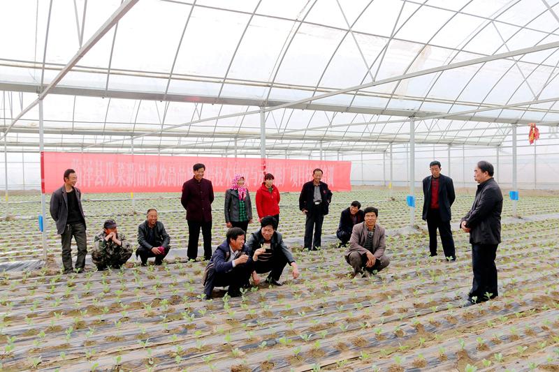 瓜菜新品种及高品质栽培技术集成与示范项目技术推广培训